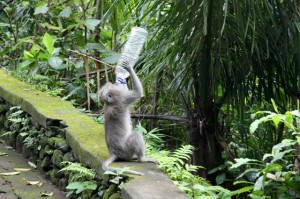 Monkey Park in Ubud