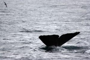 Whalewatching in Kaikoura
